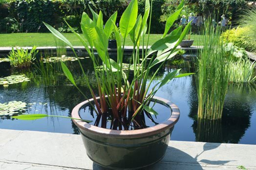 Easy DIY Container Water Gardens The Garden Glove