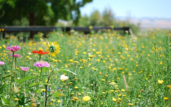 How To Start a Wild Flower Garden