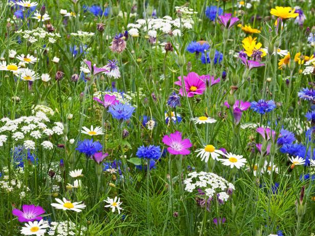 RX-DK-HTG34801_flower-meadow_s4x3.jpg.rend.hgtvcom.616.462