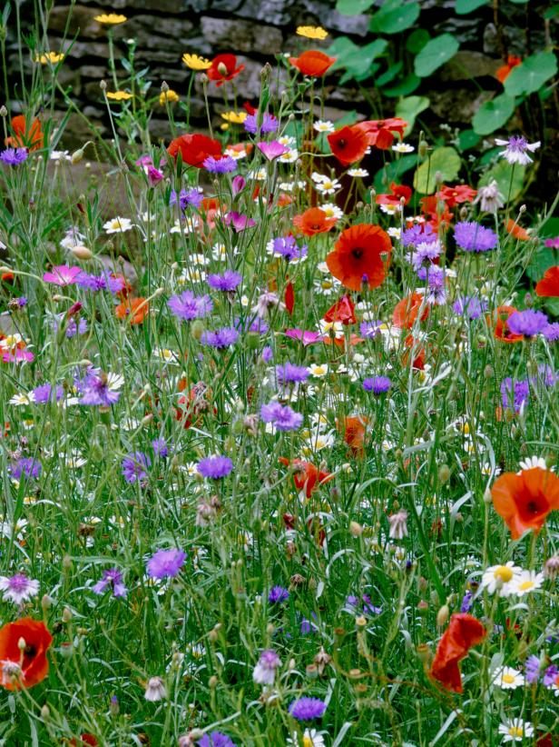 How to Grow a Wildflower Garden