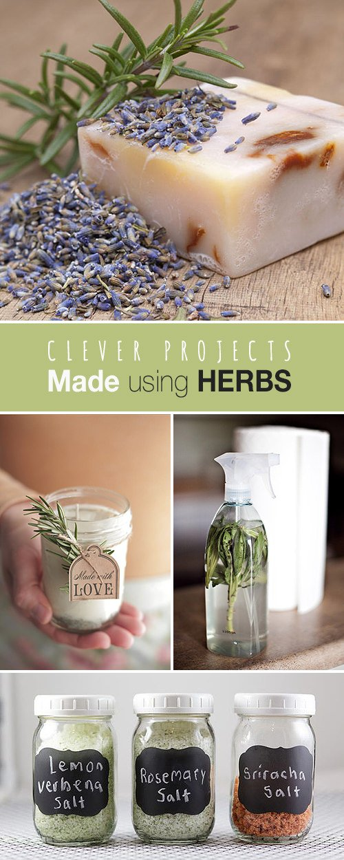 Clever Projects Made using Herbs