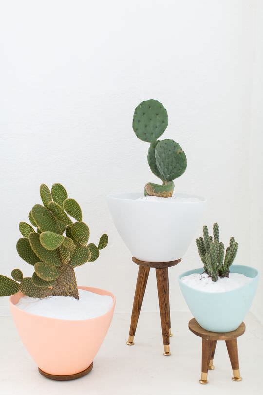 Indoor cool cactus succulent projects the garden glove - Fabulous flower stand ideas to display your plants look more beautiful ...