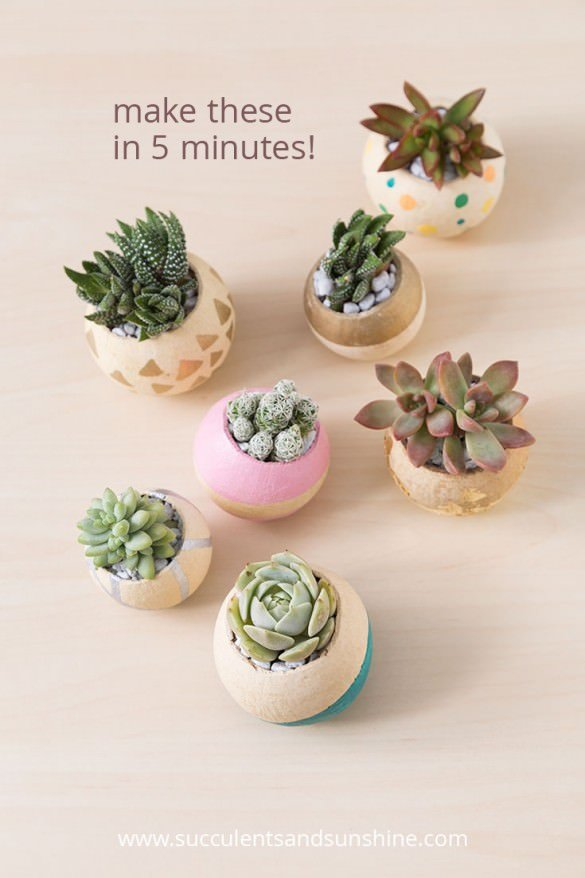 Indoor cool cactus succulent projects the garden glove - Best indoor succulents ...