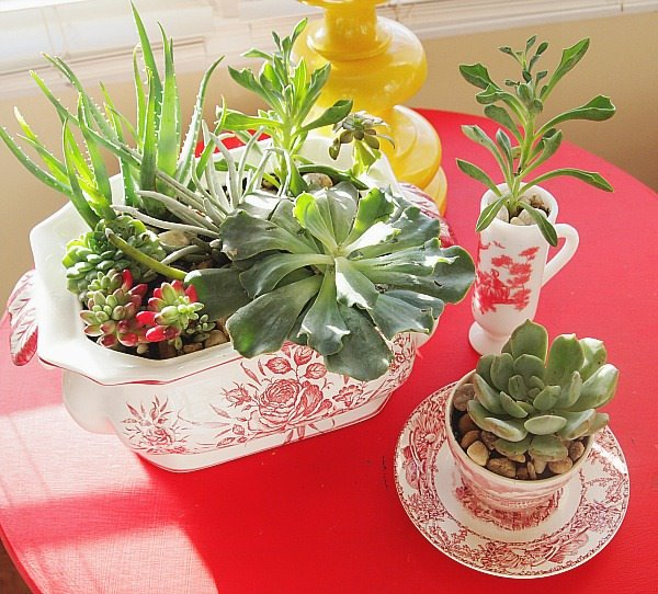 Indoor Cool Cactus & Succulent Projects