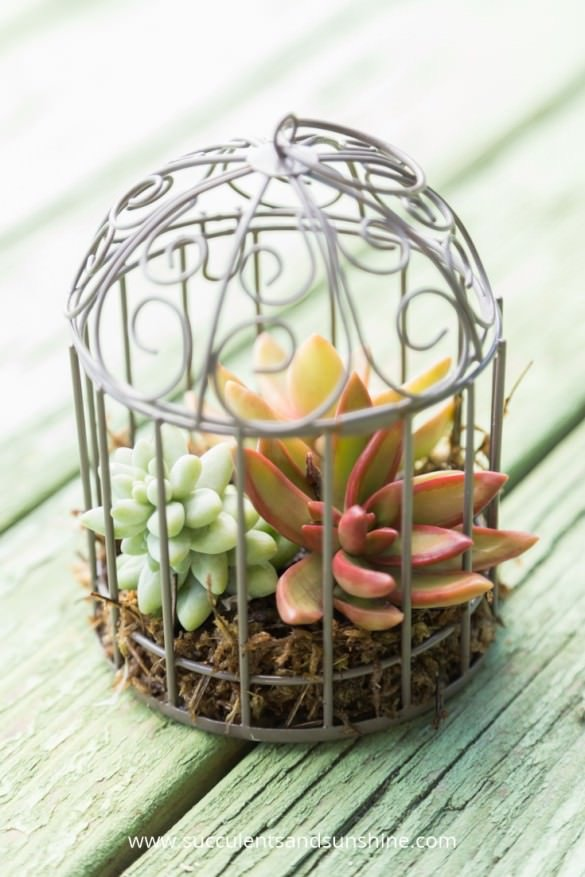 Indoor Cool Cactus & Succulent Projects-6