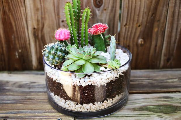 Indoor Cool Cactus Succulent Projects The Garden Glove
