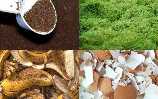 Top Organic Garden Fertilizers You Can Make