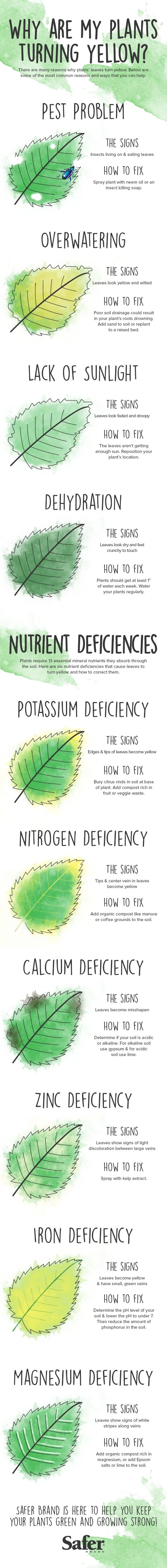 Garden cheat sheets-5