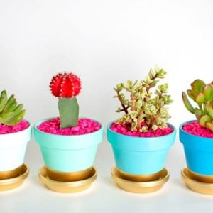 Easy DIY Project : Painting Terra Cotta Pots