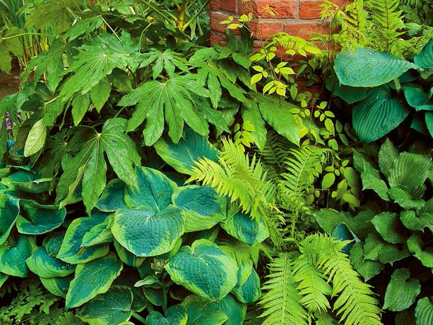 gorgeous shade loving plants  the garden glove, Natural flower