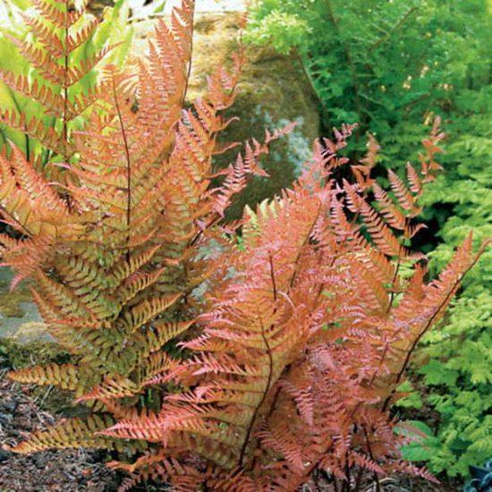 7 Gorgeous Shade Loving Plants