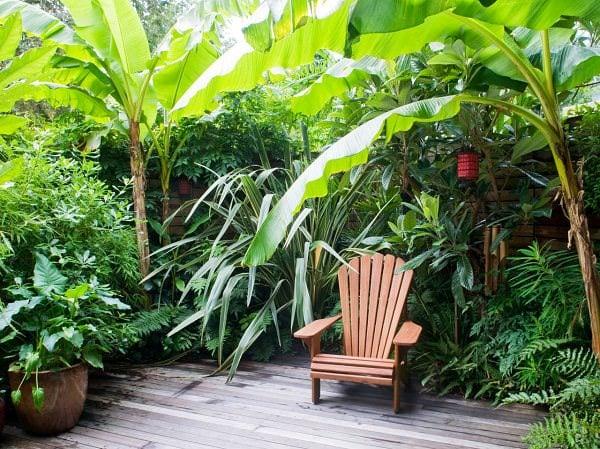 Hardy Tropical Plants You Can Grow The Garden Glove