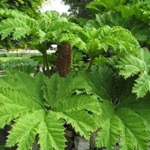 Hardy Tropical Plants You Can Grow!