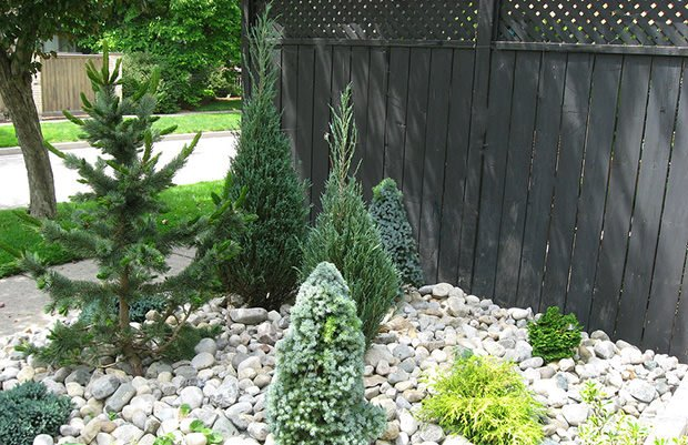 Conifer Garden Ideas choose conifers in sizes that fit the scale Landscaping With Conifers