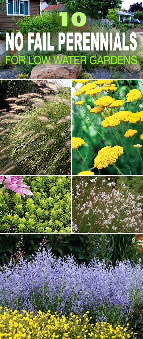 Genial 10 No Fail Perennials For Low Water Gardens