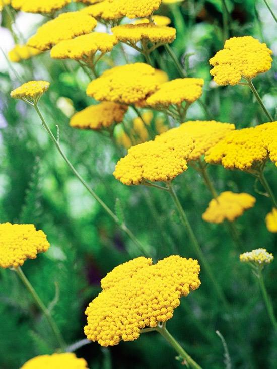 10 No Fail Perennials For Low Water Gardens The Garden Glove