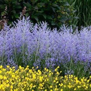 10 No Fail Perennials for Low Water Gardens