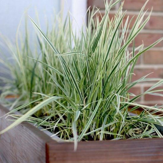 Favorite New DIY Garden Ideas & Projects