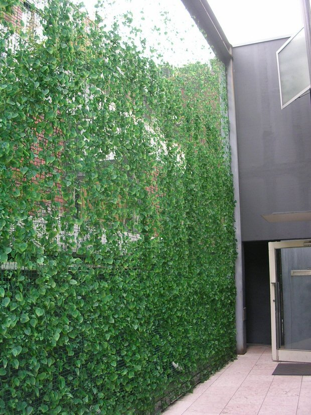 Privacy with plants-9