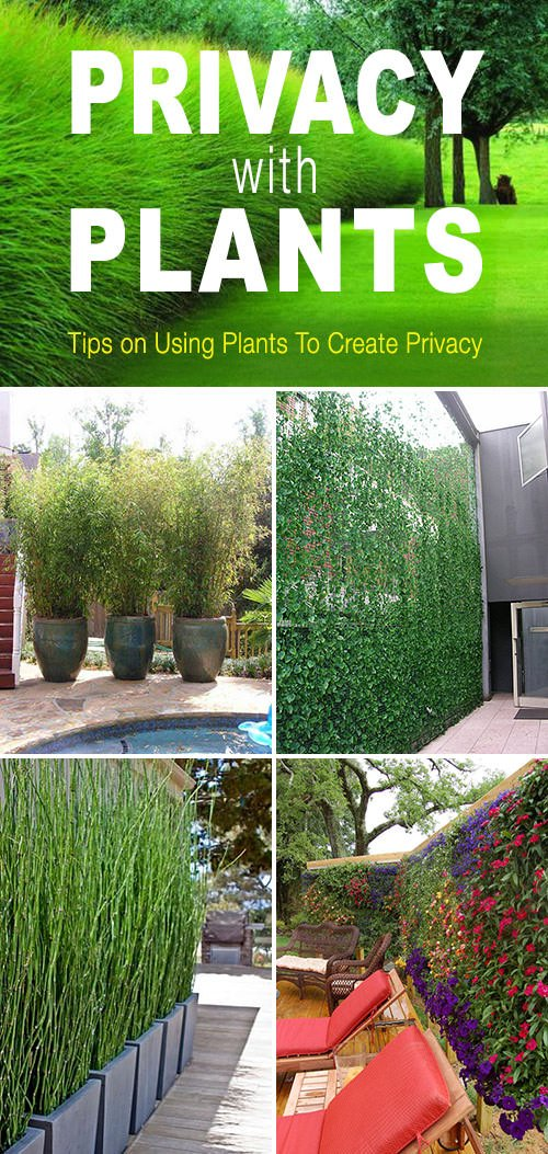 Privacy with plants the garden glove for Garden 50 designs to help you destress