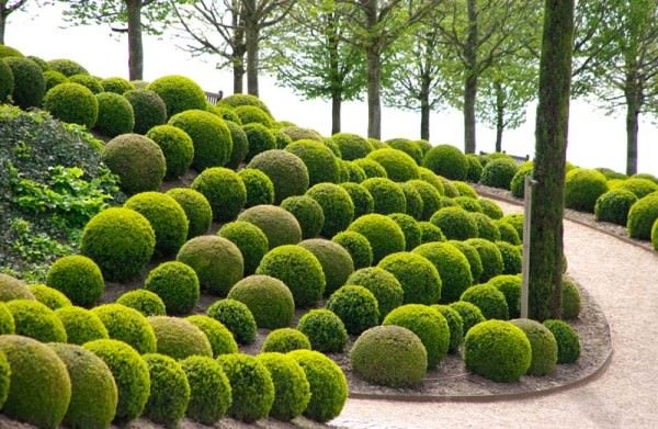 Genial DIY Garden Topiary Projects