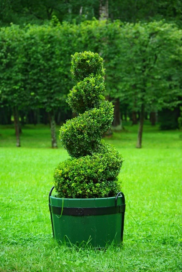 DIY Topiary Projects for the Garden | The Garden Glove