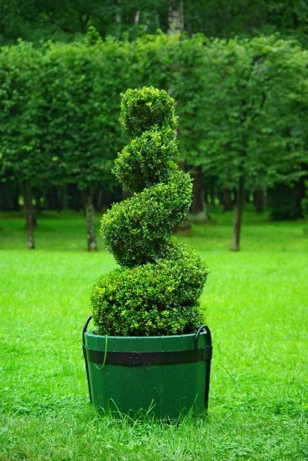 DIY topiary-2
