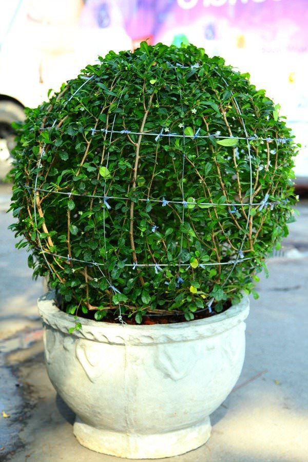 DIY topiary-3
