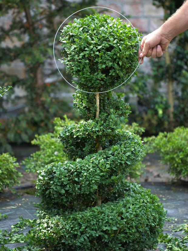 DIY Garden Topiary Projects The Garden Glove