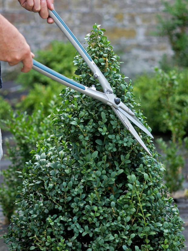 DIY topiary-5