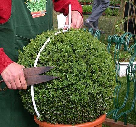 DIY topiary-6