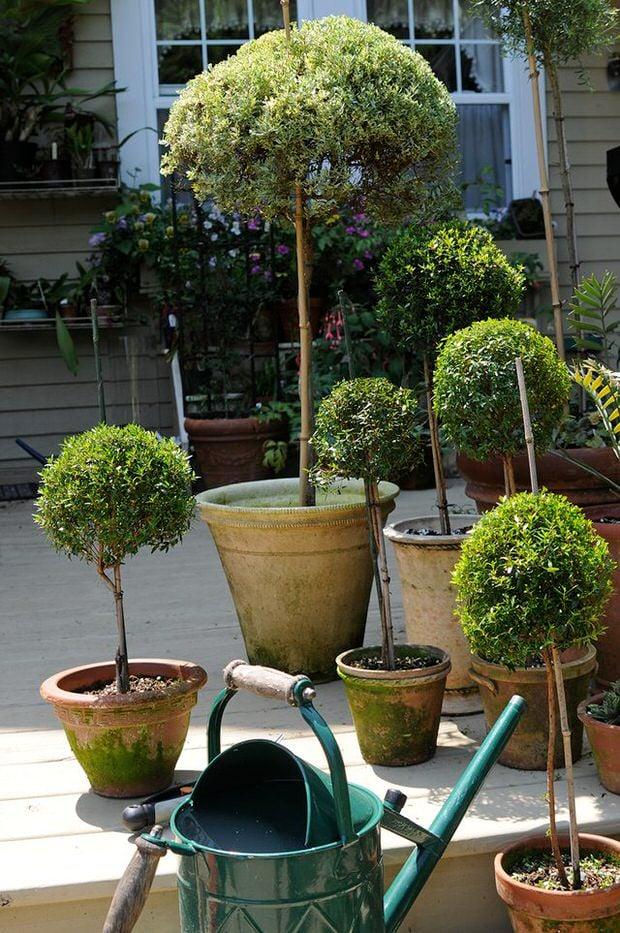 DIY topiary-7