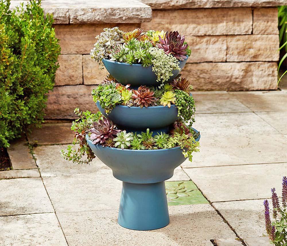 Sedum Projects & DIY Succulent Planters