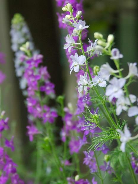 Top 12 Poisonous Plants Are They In Your Garden The