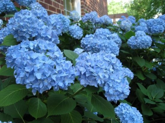 Top 12 Poisonous Plants - Are They in Your Garden?
