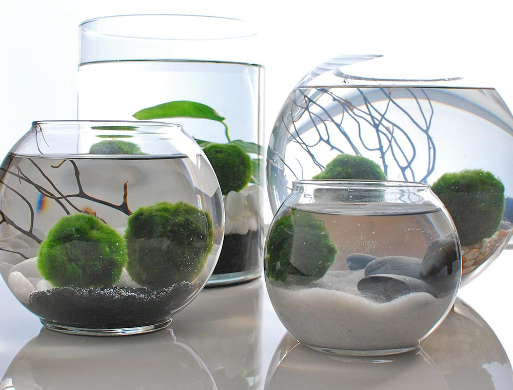 Clever & Cool Indoor Garden Ideas & Projects