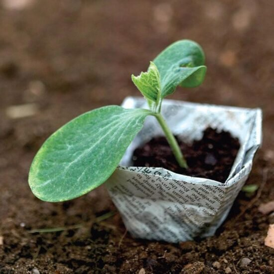Growing Seeds Indoors is Easy!