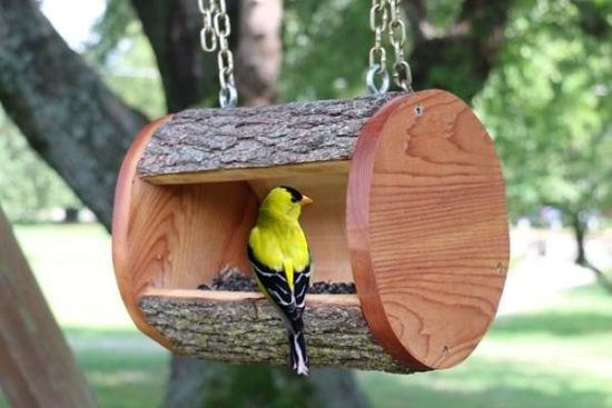 Creative DIY Bird Feeders