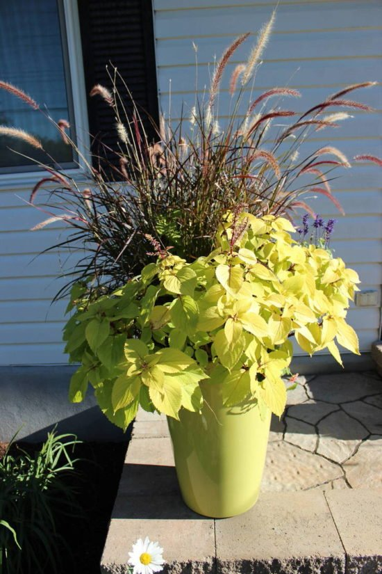 Fall Planter Ideas- Wow in 3 Easy Steps