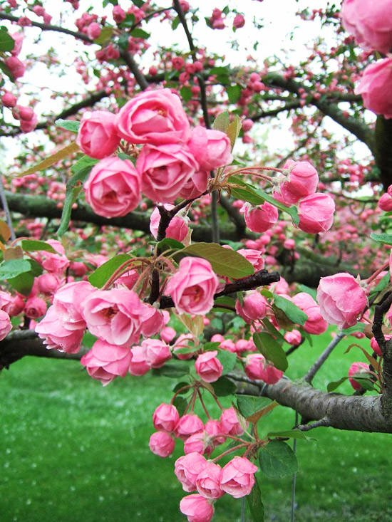 Beautiful Spring Blooming Trees | The Garden Glove