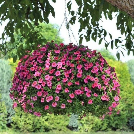 Hanging Flower Baskets : 5 Secrets the Pros Use