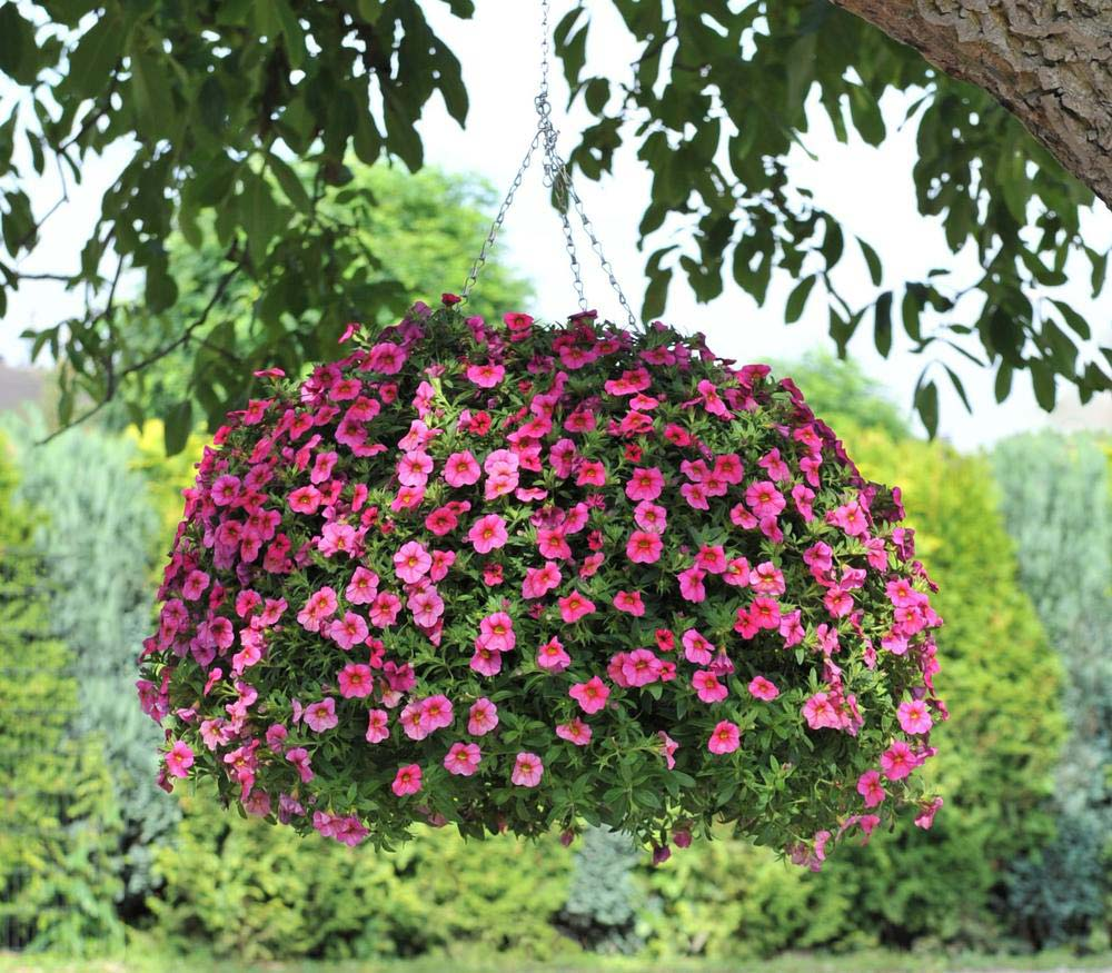 Hanging Flower Baskets : 5 Secrets The Pros Use | The Garden Glove