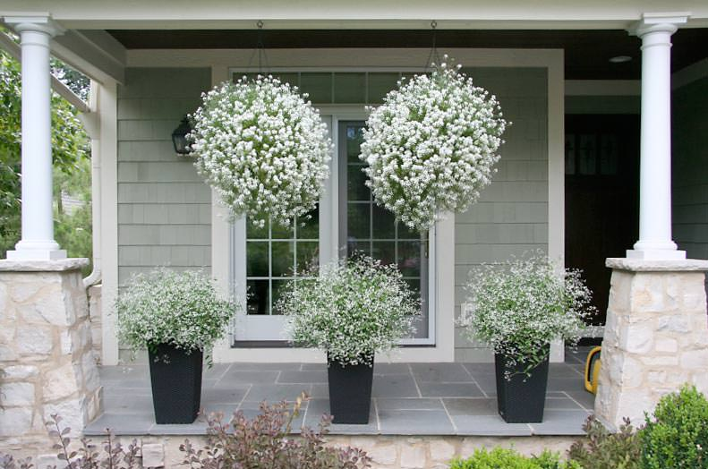 Hanging Flower Baskets 5 Secrets The Pros Use The