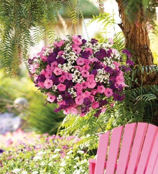 Hanging Baskets : 5 Secrets the Pros Use