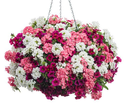 Best Flower Combinations For Hanging Baskets : Hanging baskets secrets the pros use garden glove