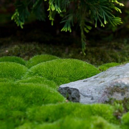 Marvelous Moss Gardens : How To Grow Moss Outdoors