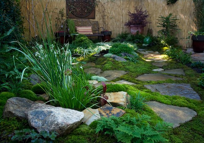 Mosses Are A Slow Growing Plant, But If You Take The Time To Prepare And  Transplant Properly, You Could Have A Magical Look To Your Yard With Little  Further ...