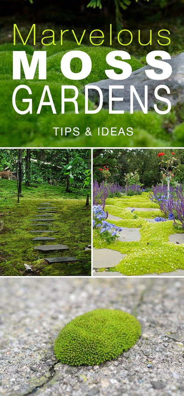 Marvelous Moss Gardens How To Grow Moss Outdoors The Garden Glove