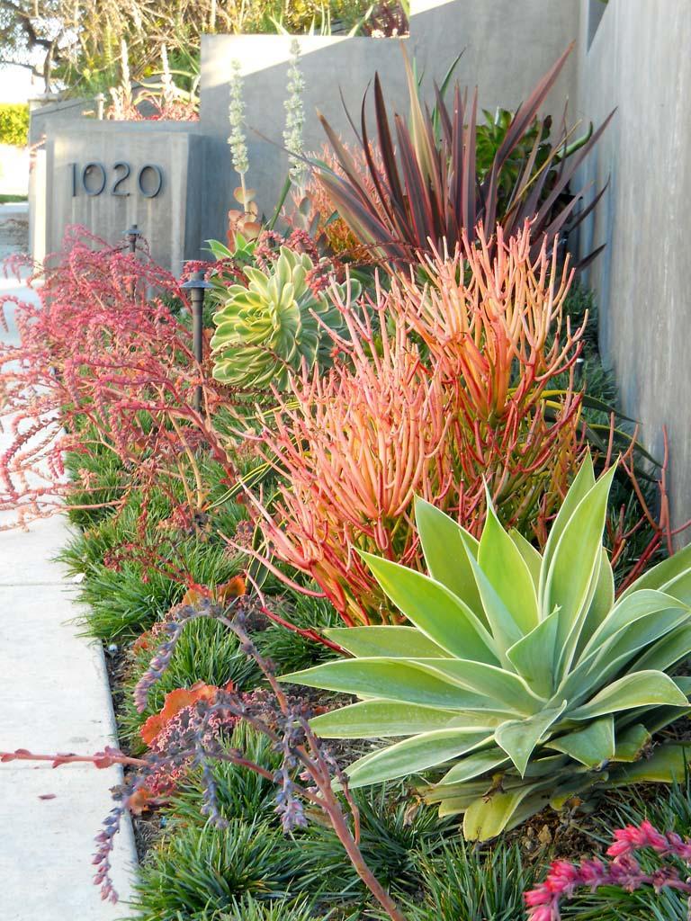 Desert Garden And Landscape Ideas The Glove