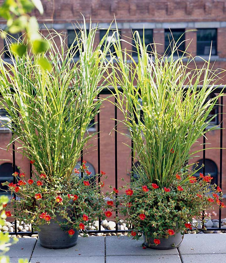 Ornamental Grasses - Update Your Curb Appeal